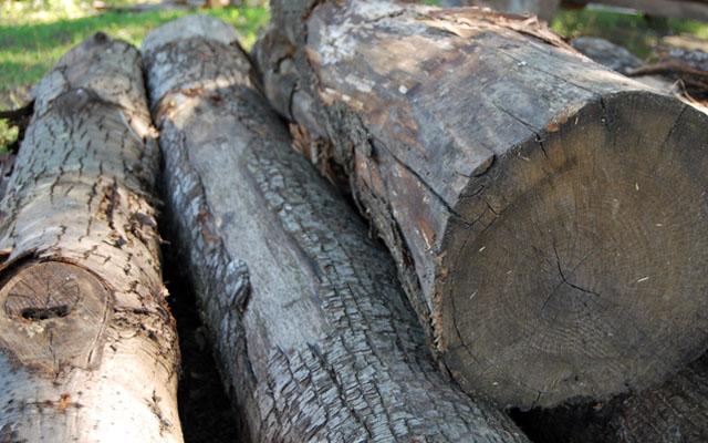 La vendita legname